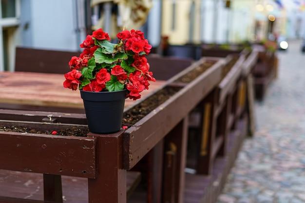 Mały garnek z czerwonymi kwiatami obok drewnianych ławek na brukowanej uliczce.