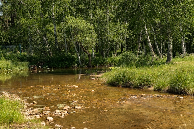 Mały górski potok z dnem kamieni płynie wśród zarośli i drzew.