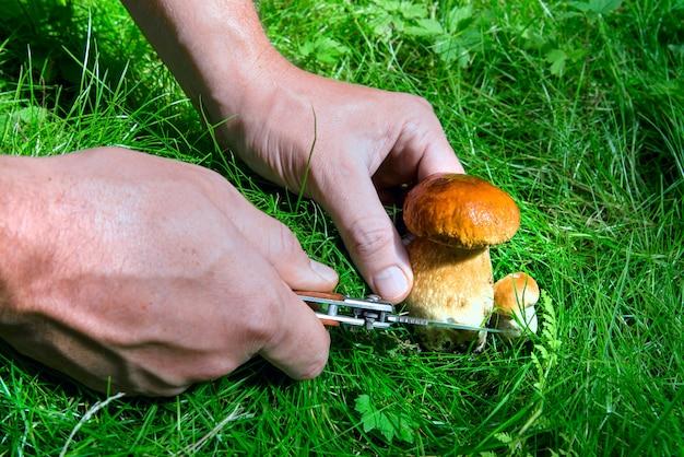 Mały grzyb tnie człowieka