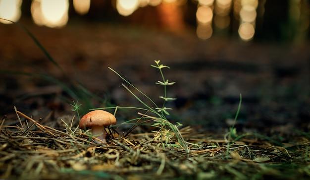 Mały grzybek z czerwoną czapką na zielonym tle bokeh lasu.