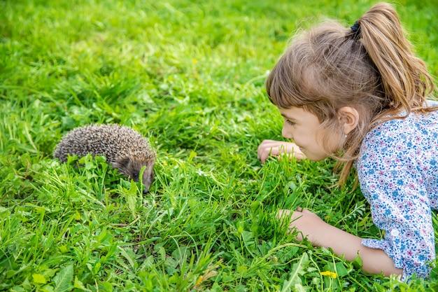 Mały jeż w naturze. zwierząt.