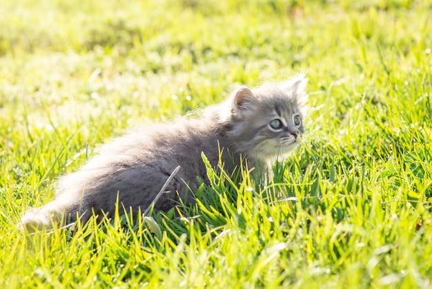 Mały kociak szuka gdzieś z zainteresowaniem. mały zabawny kot na zewnątrz