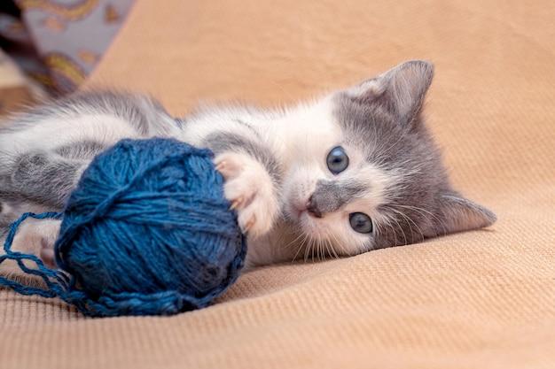 Mały kot bawi się motkiem nici.