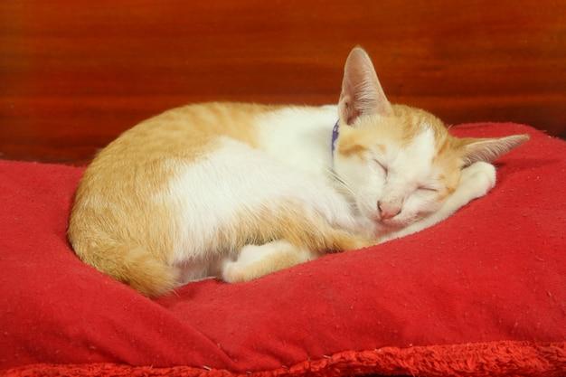Mały kot (kotek) ma żółte i białe futro spać na czerwonej poduszce na tle drewna
