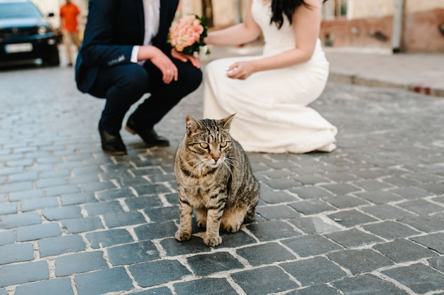 Mały kot na tle pana młodego i panny młodej na ulicy. para ślub i kot na zewnątrz.