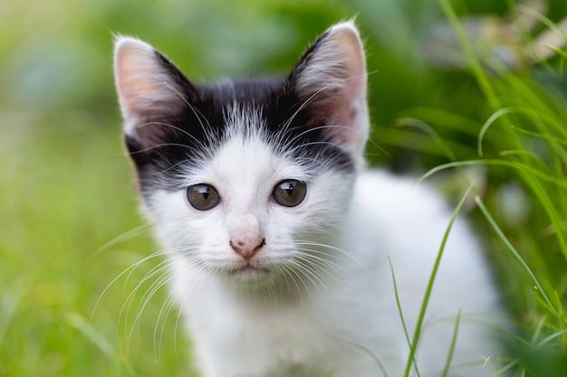 Mały kot siedzi na trawie.