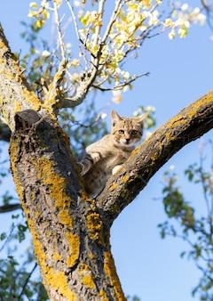 Mały kot uwięziony na drzewie