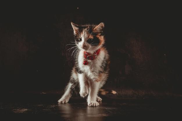 Mały kot w studiu fotograficznym