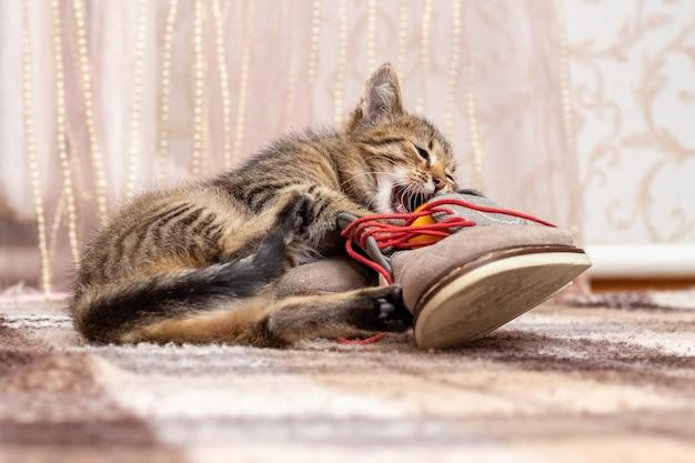 Mały kotek bawi się butami. mały kot gryzie but