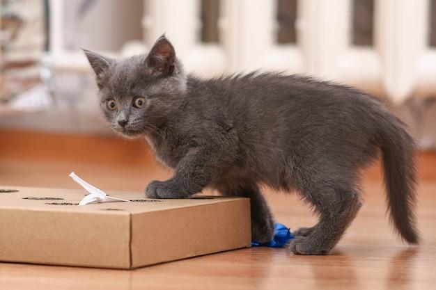 Mały kotek bawi się interaktywnym, ręcznie robionym pudełkiem na zabawki z otworami, w których znajdują się zabawki dla kota