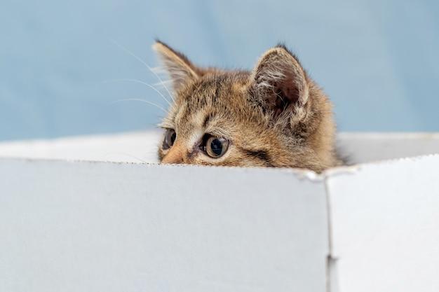 Mały kotek chowa się w kartonowym pudle, z pudła widać oczy kociaka