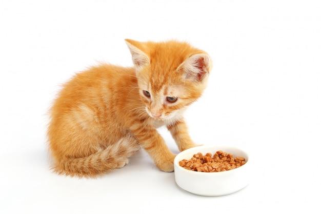 Mały kotek imbir zjada karmę dla kotów z miski.