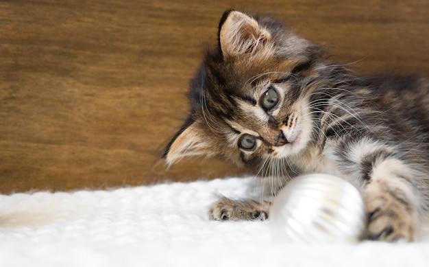 Mały kotek kłamie i bawi się bombkami