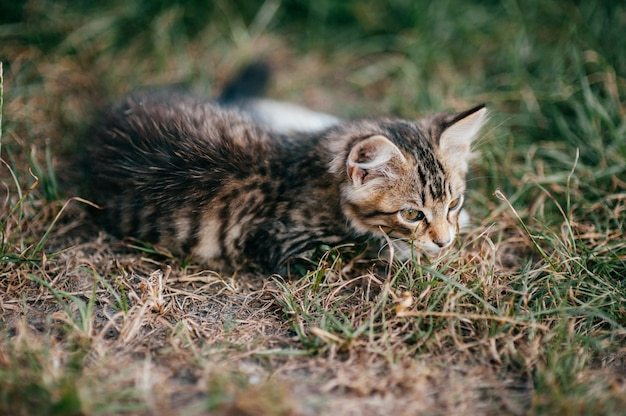 Mały kotek leżący w trawie