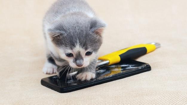 Mały kotek przy telefonie z tłuczonym szkłem i kluczem. naprawa telefonów komórkowych