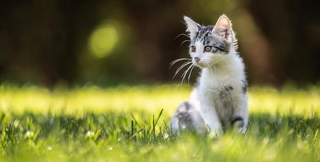 Mały kotek siedzi na trawie w ogrodzie. ma puszyste futerko, ostre uszy i ciekawy umysł.
