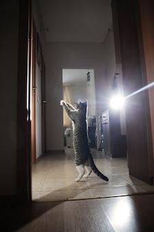 Mały kotek skaczący z szeroko rozstawionymi łapkami