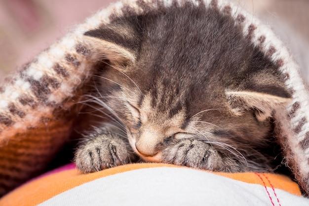 Mały kotek śpi. kociak w sypialni przykryty jest kocem_