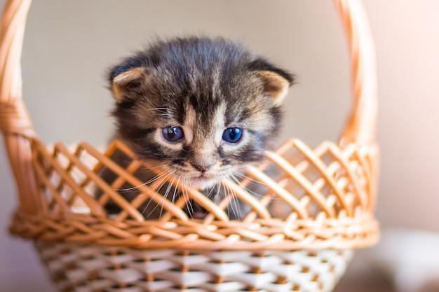 Mały kotek w paski wygląda z koszyka