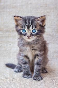 Mały kotek w paski z niebieskimi oczami na neutralnym, jednorodnym tle z szorstkiej tkaniny