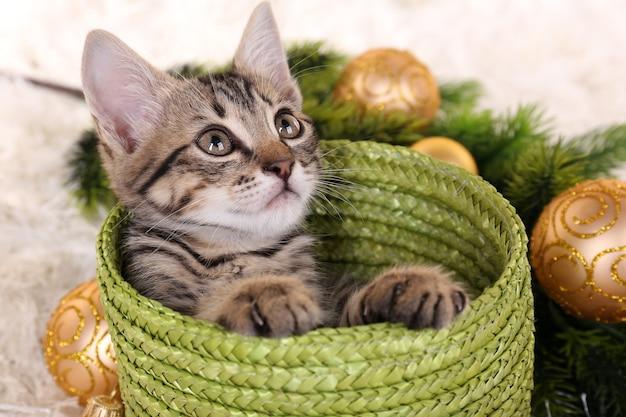 Mały kotek ze świątecznymi dekoracjami na dywanie