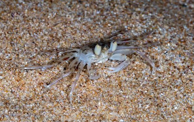 Mały krab na plaży