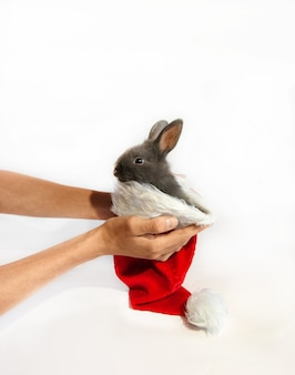 Mały królik w czerwonym kapeluszu świętego mikołaja jest trzymany przez kobiece ręce na białym tle.