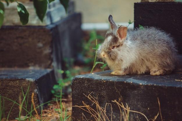 Mały królik.