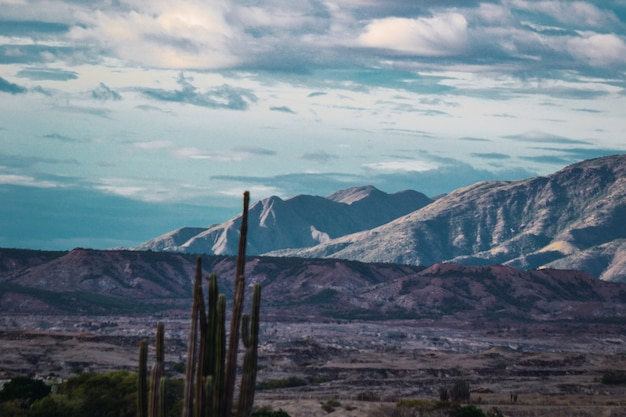 Mały krzak kaktusów na pustyni tatacoa w kolumbii w ponury dzień