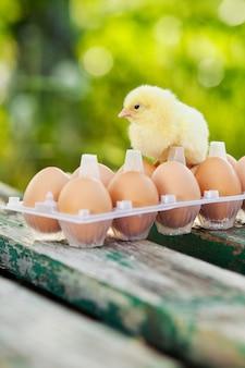 Mały kurczak i jajka na drewnianym stole. zielony bsckground.