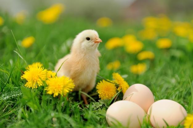 Mały kurczak i jajko na trawie