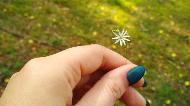 Mały kwiatek w kobiecej dłoni
