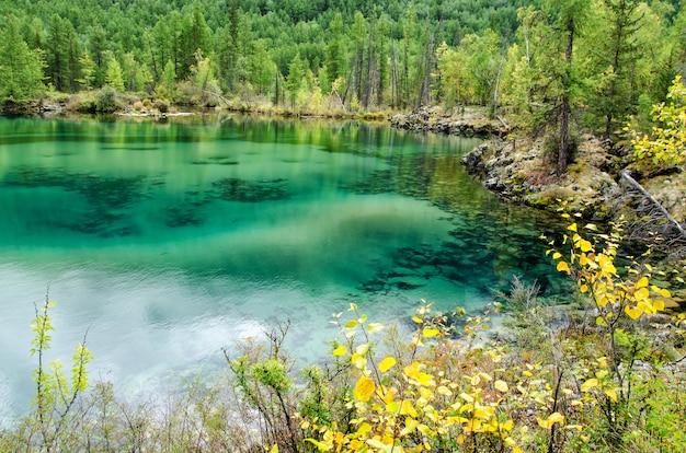 Mały las jezioro z zielonkawą wodą w lesie jesienią, jezioro lawy