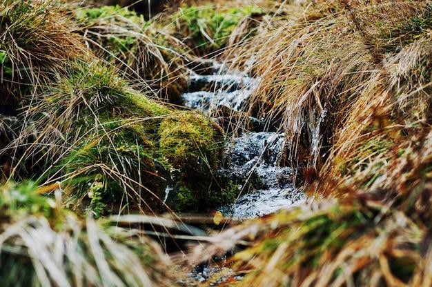 Mały leśny strumień z zamarzniętą trawą i mchem
