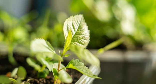 Mały liść kiełkujący rośliny, rozwijający nowe życie