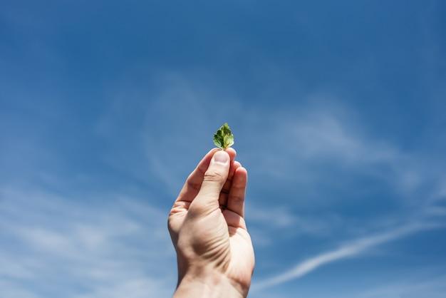 Mały liść w ręku