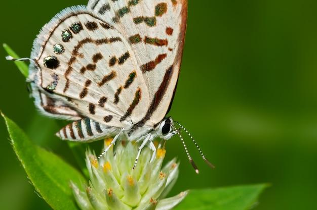 Mały motyl na kwiacie z zielonym backround