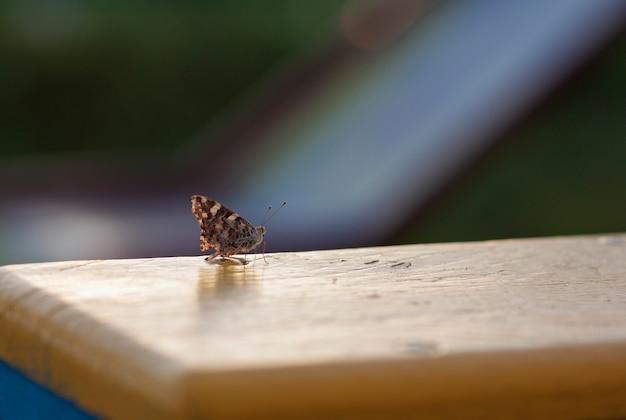 Mały motyli miejsca siedzące na kolor żółty desce zamazywał tło