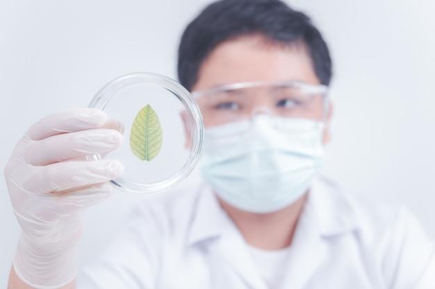 Mały naukowiec patrzył na liść na szalce petriego w laboratorium, nauka i nauka w koncepcji szkoły