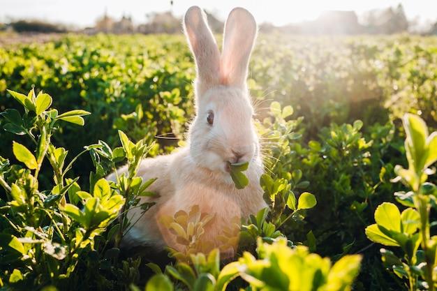 Mały owłosiony królik w trawie