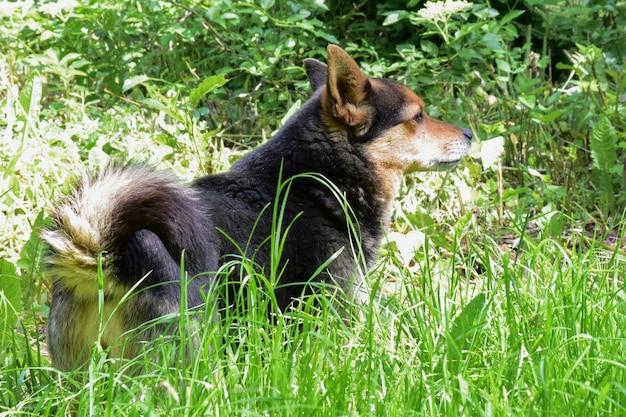 Mały pies cofa się i patrzy w prawo na wysoką, zieloną, jasną trawę w parku. niewyraźne tło