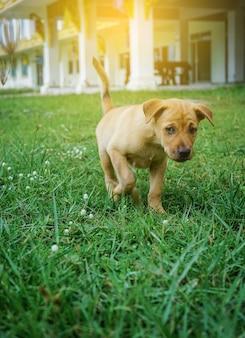 Mały pies patrzeje coś w ogródzie z światłem słonecznym.