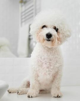 Mały pies siedzi w łazience