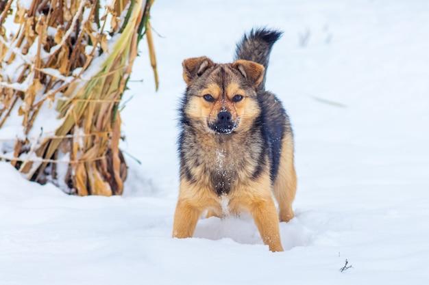 Mały pies w ogrodzie zimowym w śniegu_