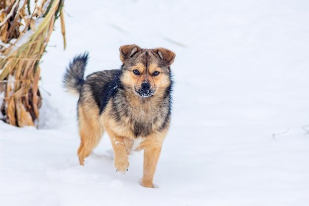 Mały pies w śniegu w ogrodzie zimą_