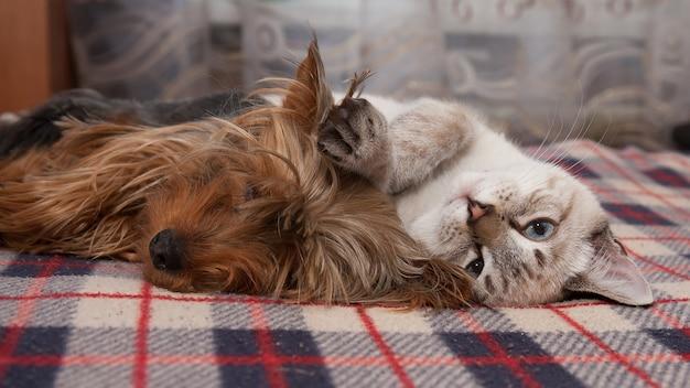 Mały piesek i kotek śpią w domu