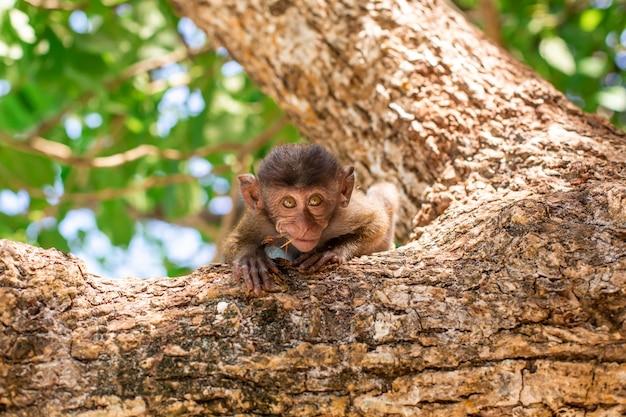 Mały portret małpy. siedzi na drzewie i patrzy w kamerę.