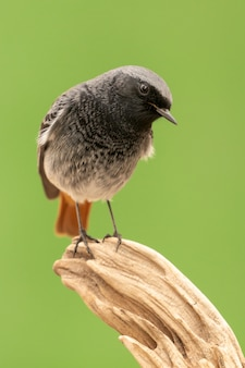 Mały ptak na pniu