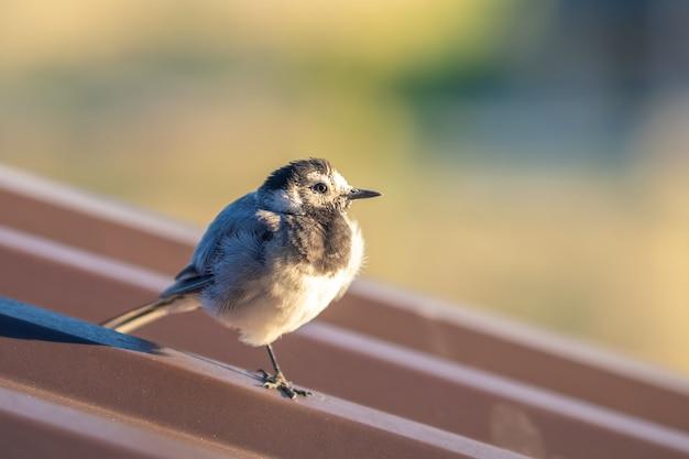 Mały ptak przysiadł na metalowym dachu budynku.