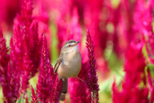 Mały ptak siedzący na czerwonych kwiatach